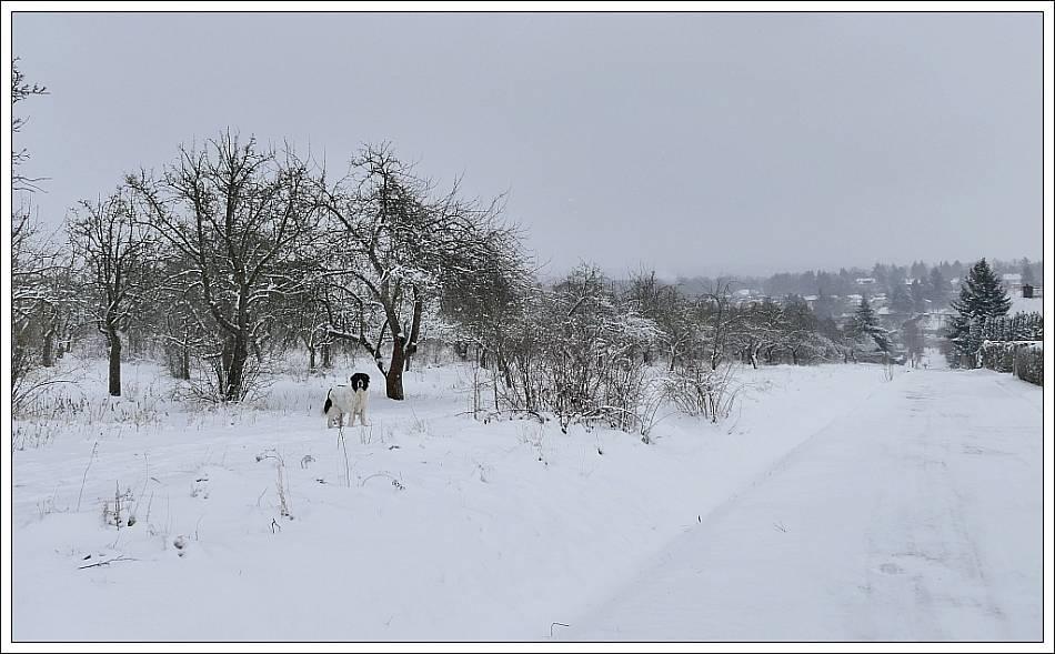 wann kommt endlich der winter