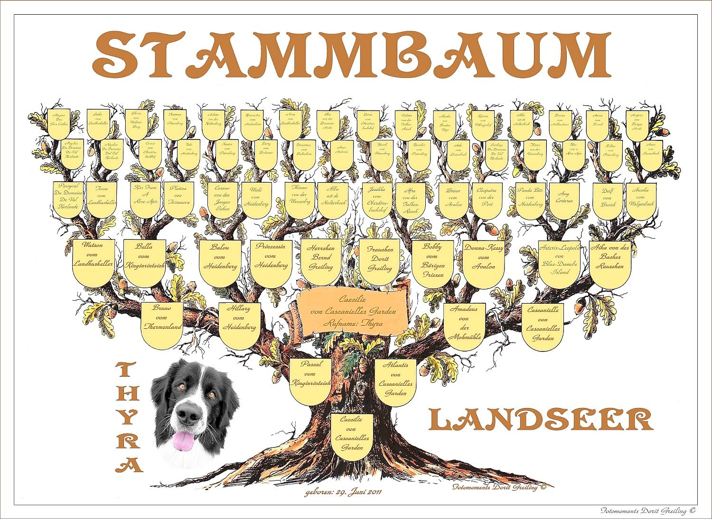 Landseer dog hund rettungshund landseerwelpen for Stammbaum zum ausdrucken