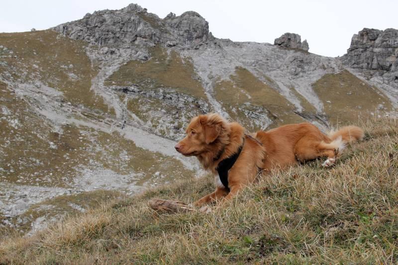 Nebelhorn4