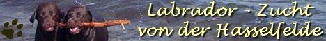 Banner Chocolabradorzucht von der Hasselfelde