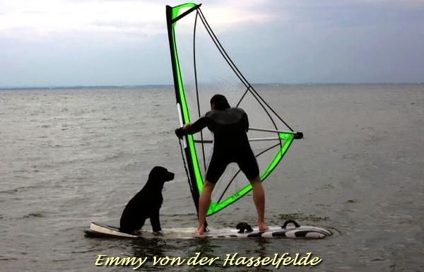 Choco-Labrador von der Hasselfelde - Emmy