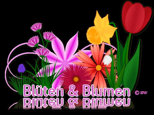 Blüten, Blumen, gebastelt, mit Paint.net erstellt, Grafik, Clipart, Gif, kostenlos, gratis Download
