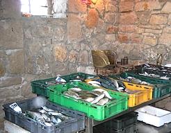 Fischmarkt Ribarnica Ozi Ferienhäuser und Ferienwohnungen Insel Murter Dalmatien Kroatien