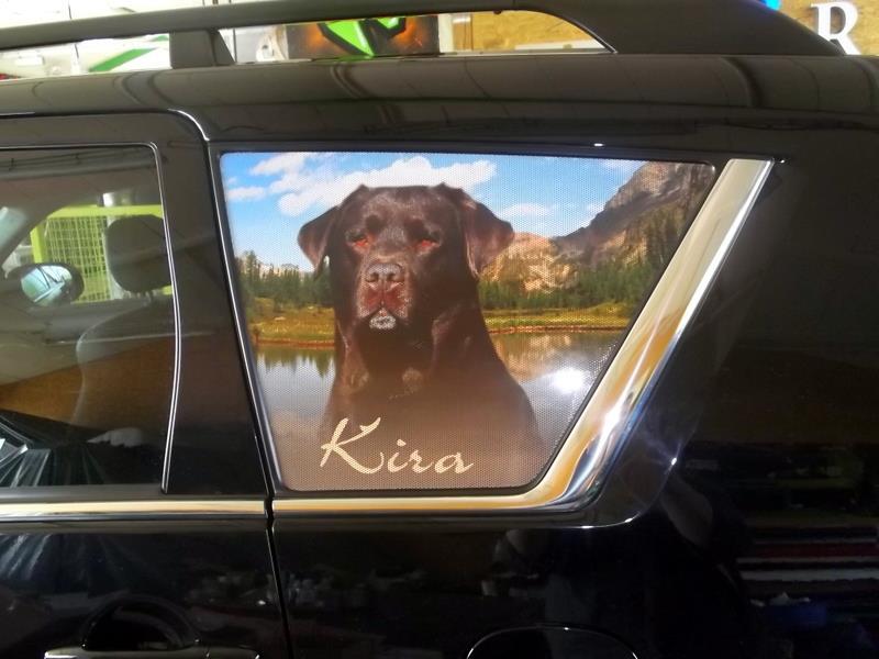 Lochfolie Auto Heckscheibe Labrador Retriever