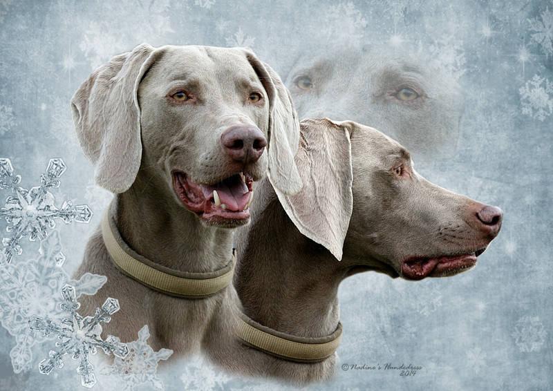 Tiercollage, Collage Hund, Tieraufkleber Januar
