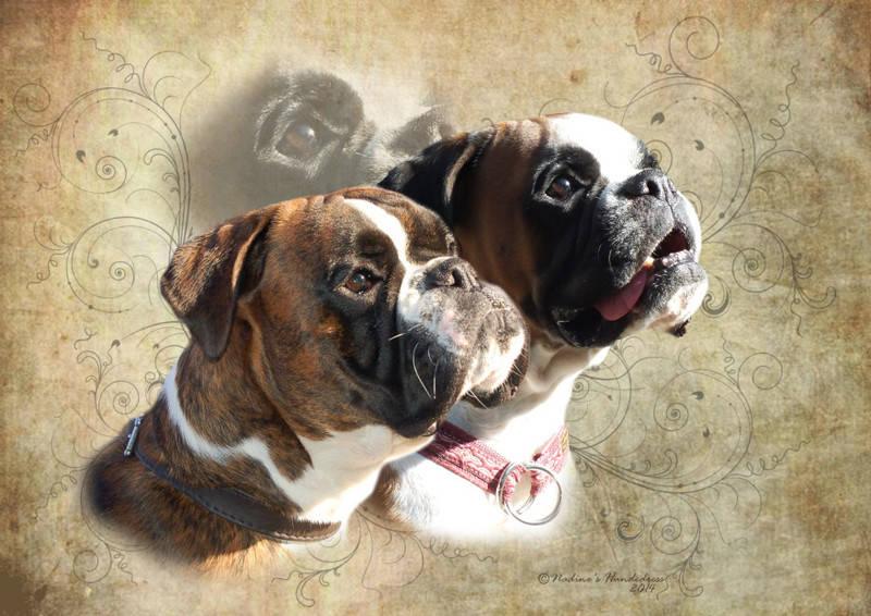Februar Tiercollage, Collage Hund, Tieraufkleber