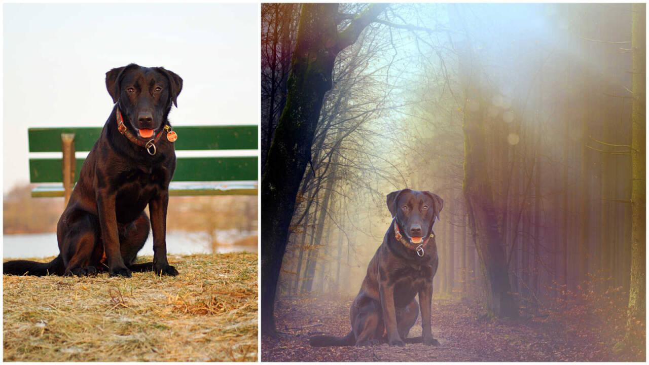 Bildbearbeitung Nadine's Hundedress