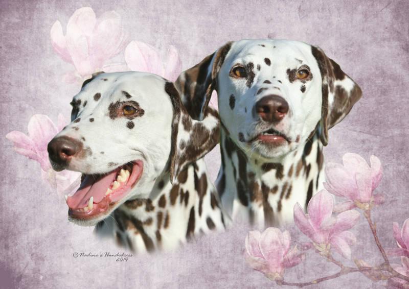 Tiercollage, Collage Hund, Tieraufkleber