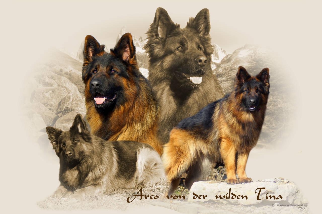 Collage Schäferhund