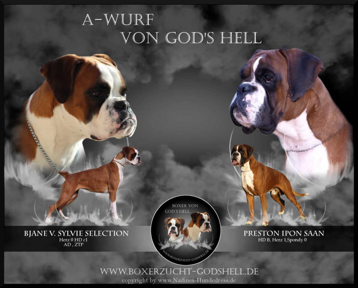 Collage Verpaarung Deutscher Boxer God's Hell Wurfankündigung