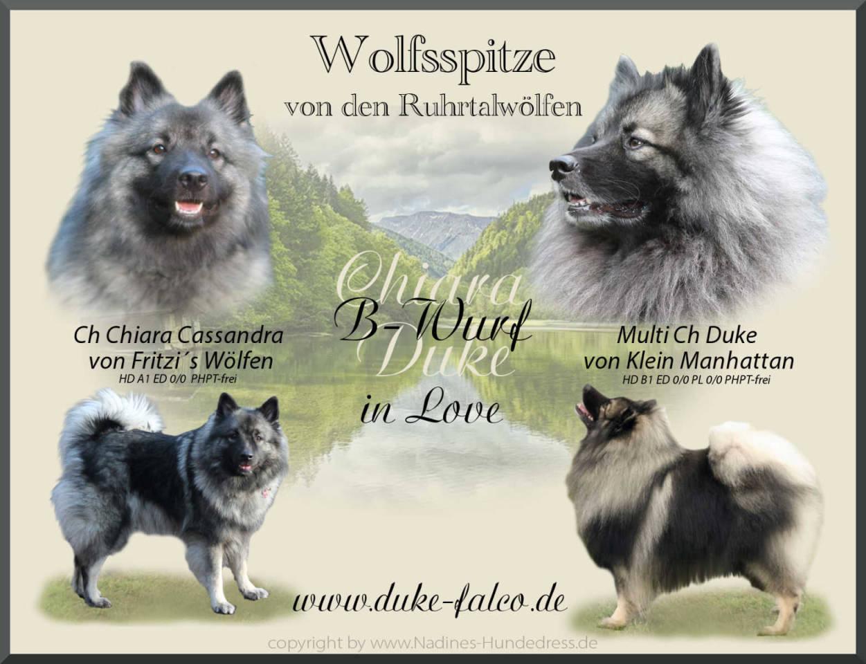 Collage Wolfspitz Verpaarung Deckcollage Wurfankündigung