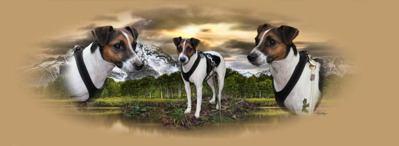 Lochfolie Auto Heckscheibe Jackrussel Terrier