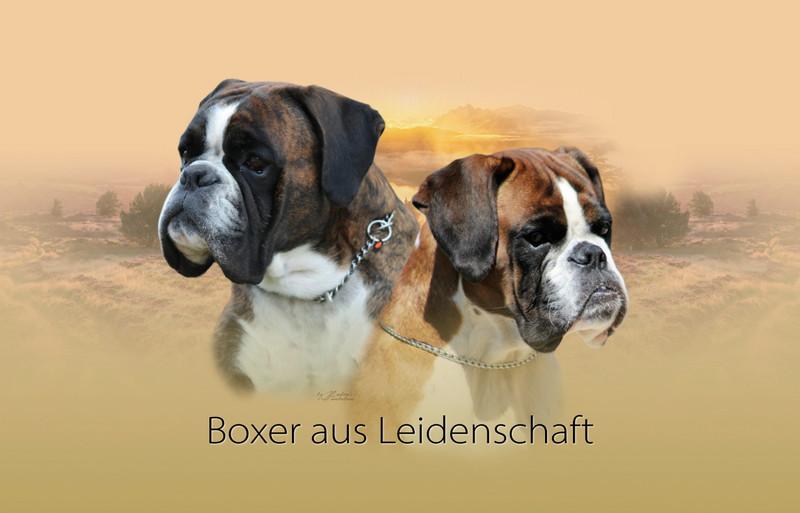 Lochfolie Tiercollage Boxer
