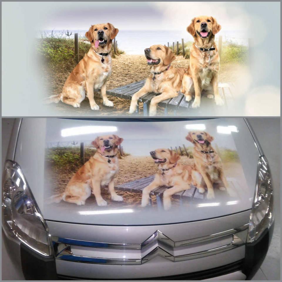 Aufkleber Motorhaube Nadine's Hundedress
