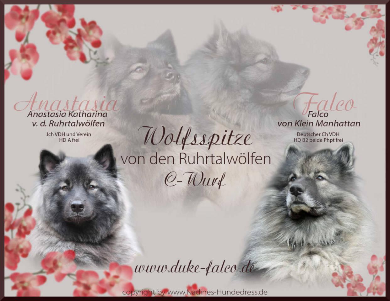 Ruhrtahlwölfe C-Wurf Wolfsspitz Verpaarung Wurfankündigung