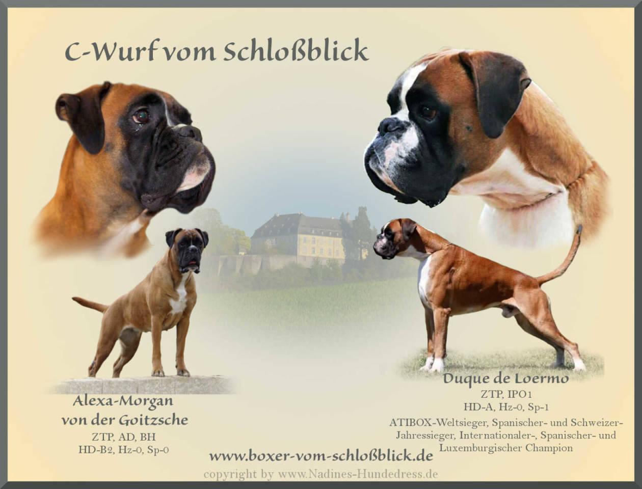 Deutscher Boxer Schloßblick C-Wurf Verpaarung Wurfankündigung