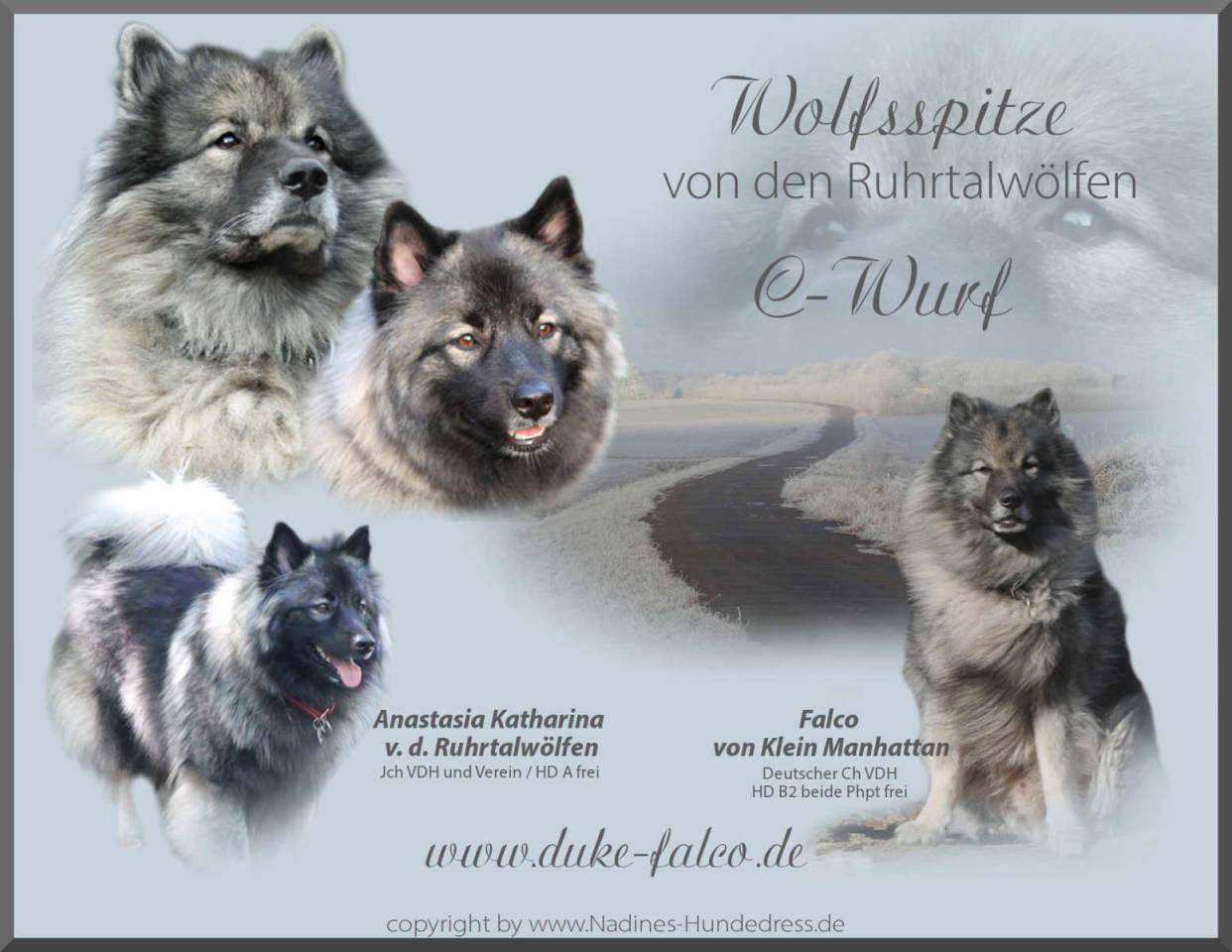 Ruhrtalwölfen Wolfsspitz C-Wurf Verpaarung Wurfankündigung