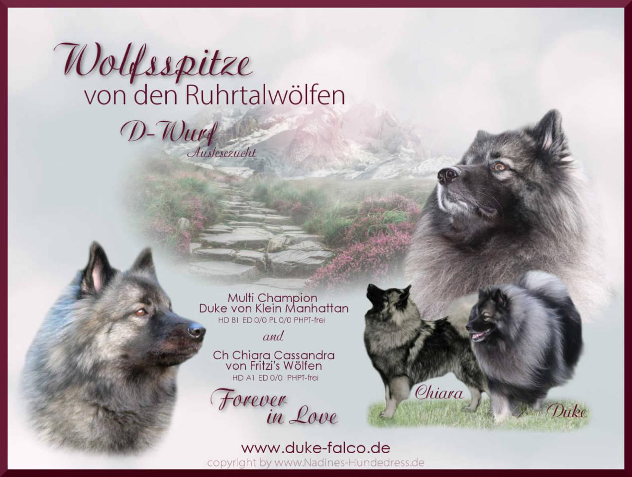 Wolfsspitz Ruhrtalwölfe Zucht D-Wurf Verpaarung Wurfankündigung