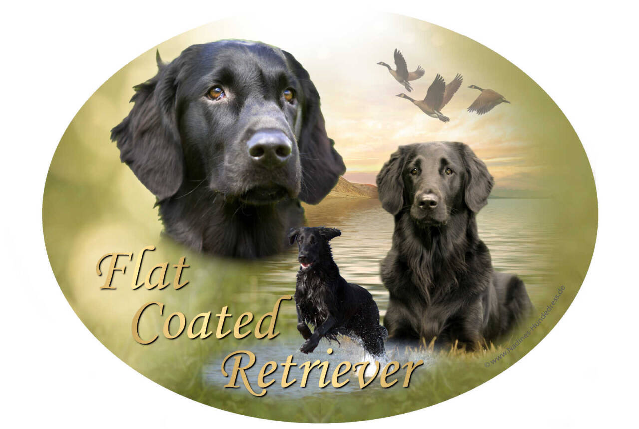 Aufkleber Flat Coated Retriever Nadine's Hundedress
