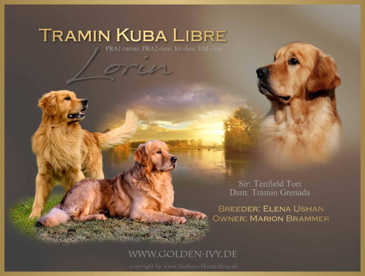 Rüdenpräsentation Nadines-Hundedress Golden-Zucht