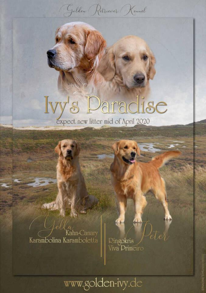 Wurfankündigung Nadine's Hundedress