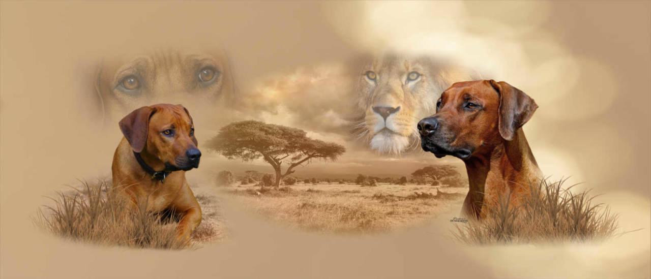 Collage Rhodesian-Ridgeback Löwenhund