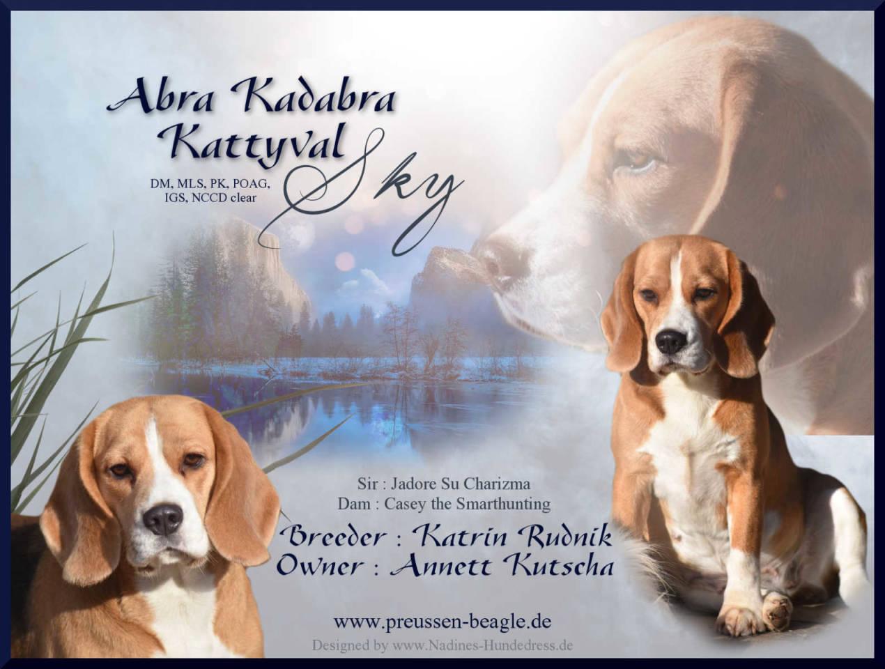 Beagle Zucht Nadines-Hundedress