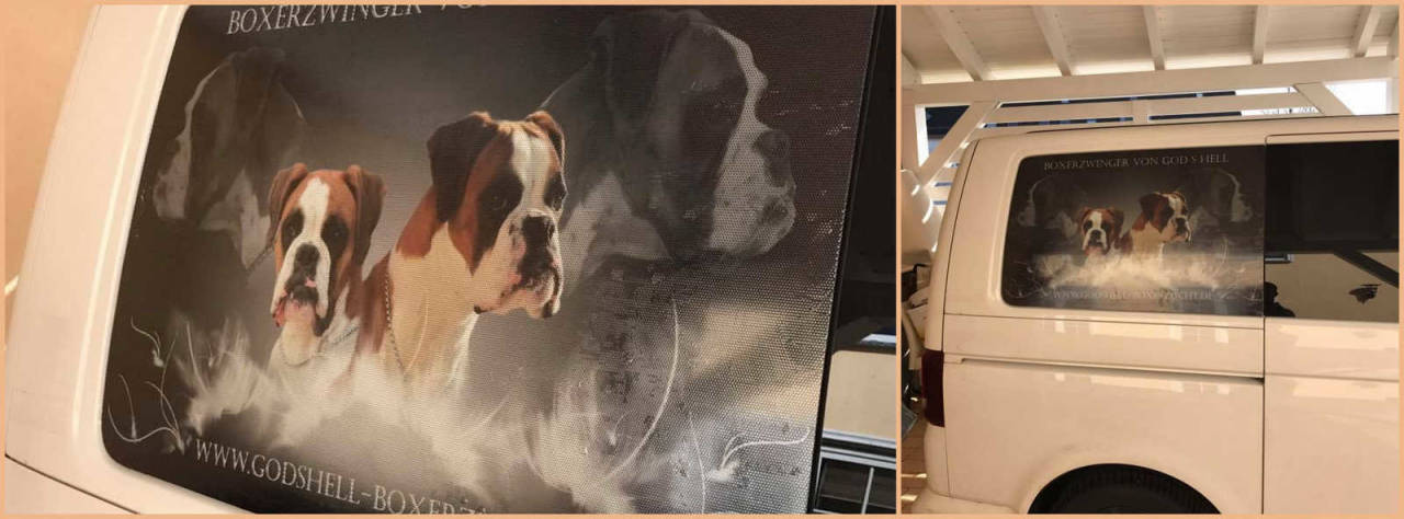 Collage Lochfolie Heckscheibe Deutscher Boxer