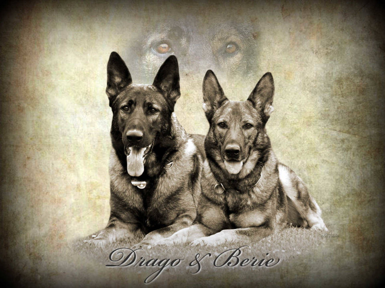 Schäferhund Nadines-Hundedress Aufkleber