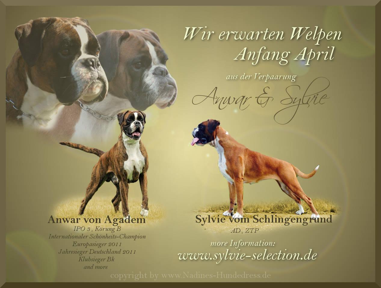 Verpaarung Tiercollage, Collage Hund, Tieraufkleber Wurfankündigung
