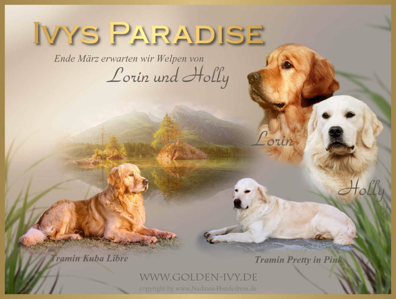 Golde Retriever Zucht Ivx's Paradise  Wurfankündigung
