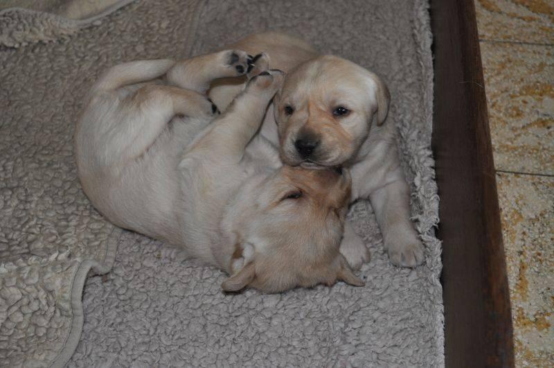 geburt von hundewelpen
