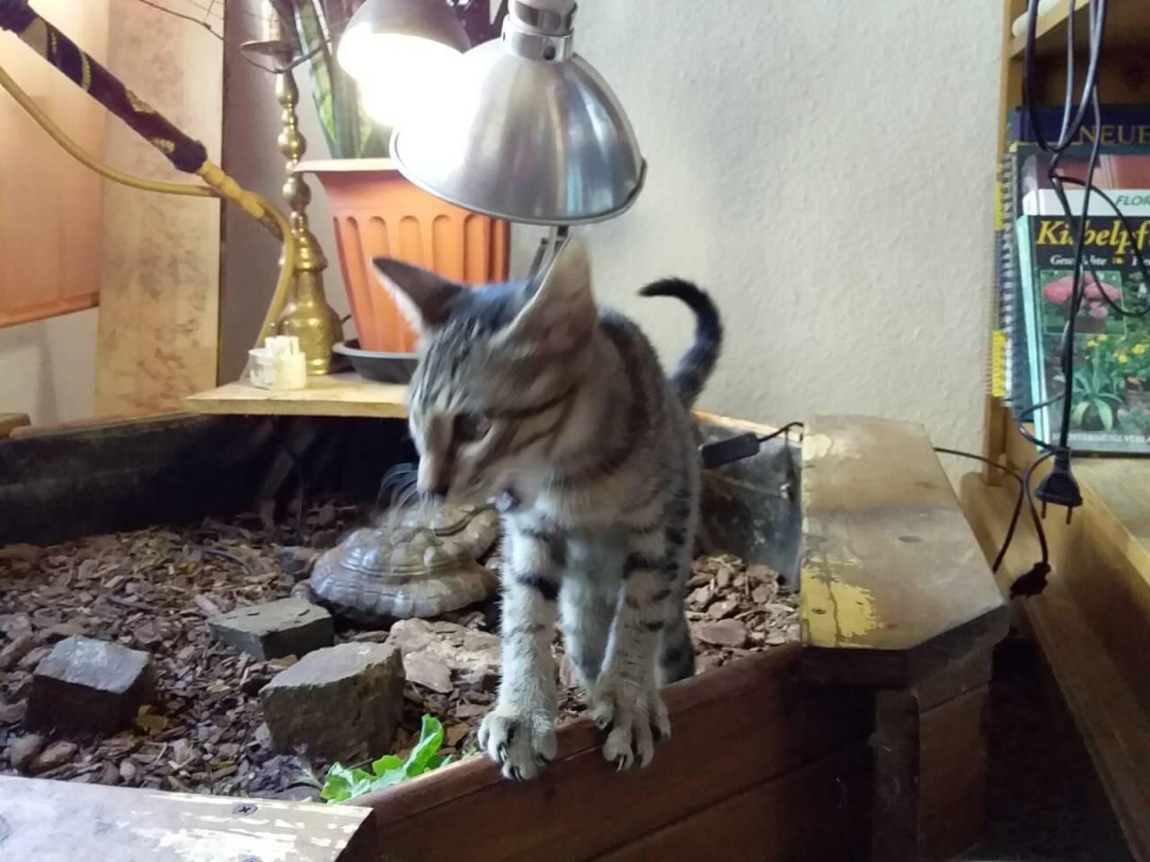 Artos in seinem neuen Zuhause