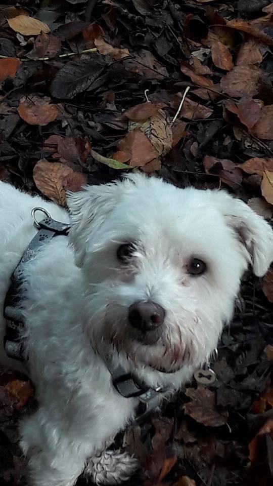 Bobby auf seinem geliebten Spaziergang
