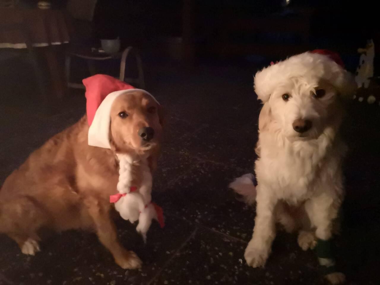 Weihnachtsgrüße 2019 von Toffee und Sylvio