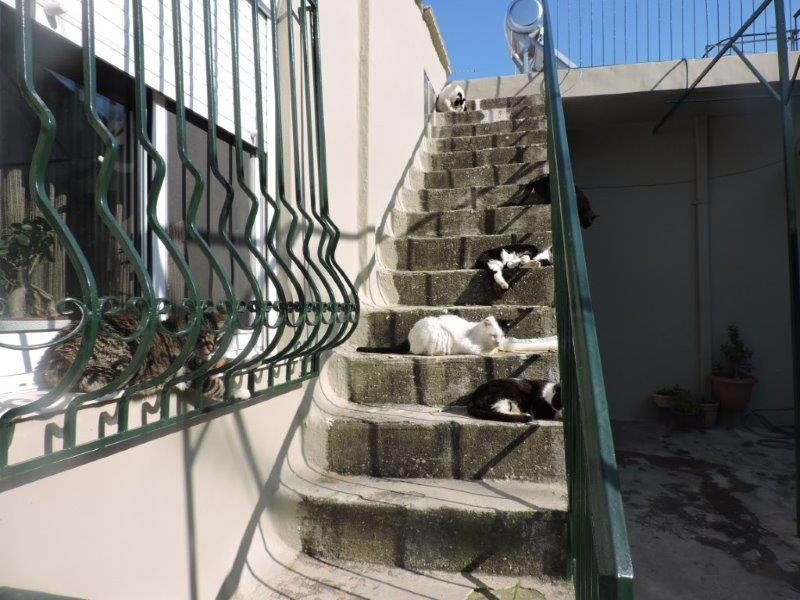 Maria's Katzen