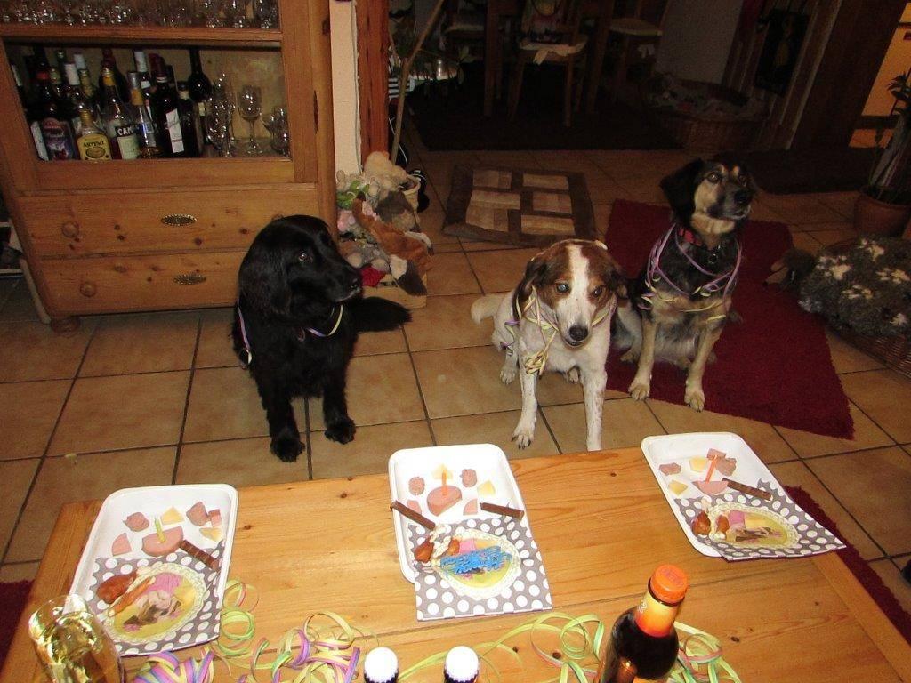 Luis und Max Geburtstagsparty