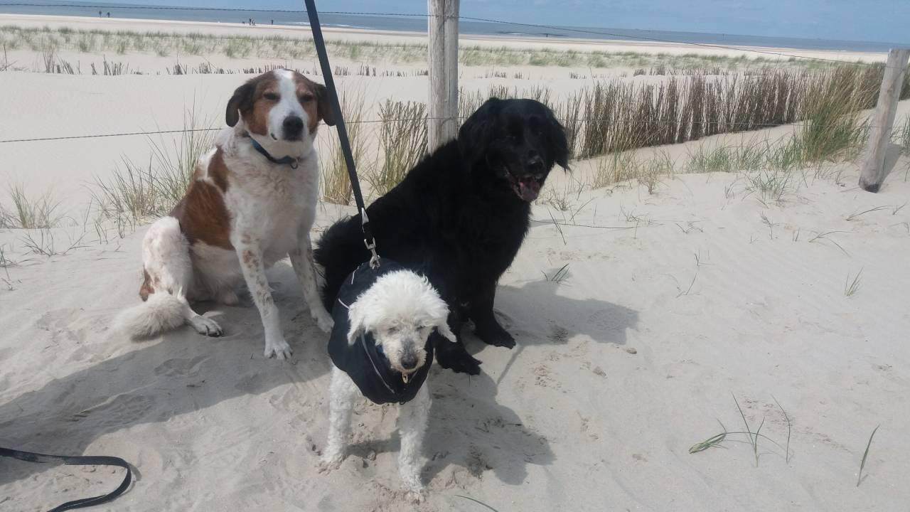 Max, Luis und Theo an der Nordsee 2017