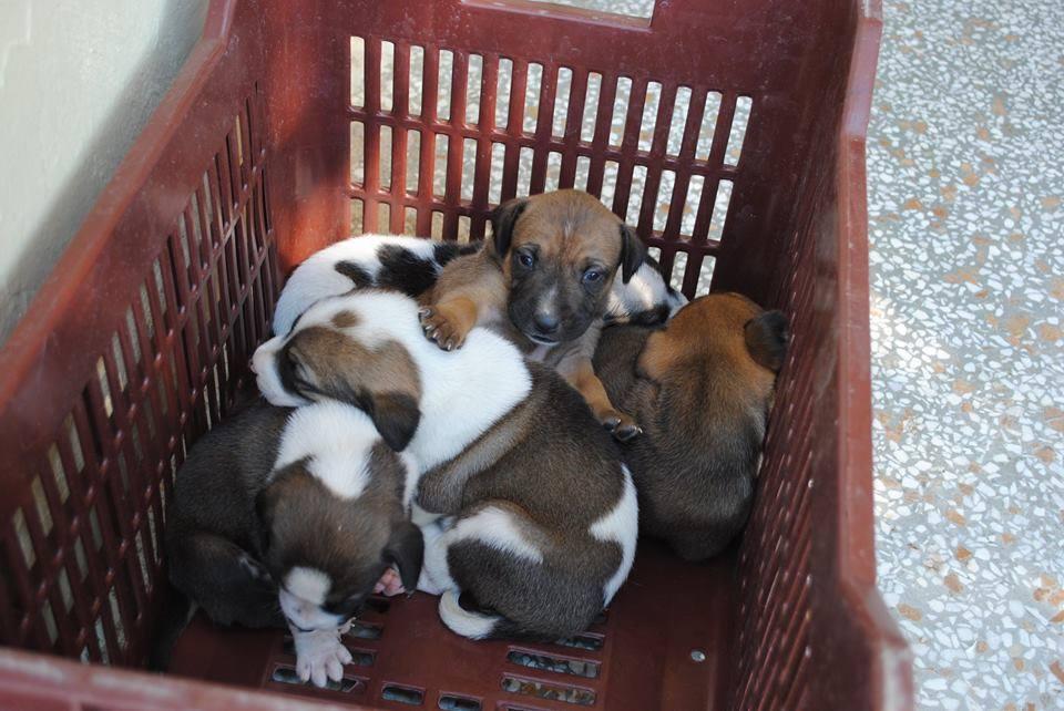 ausgesetzte Hundewelpen