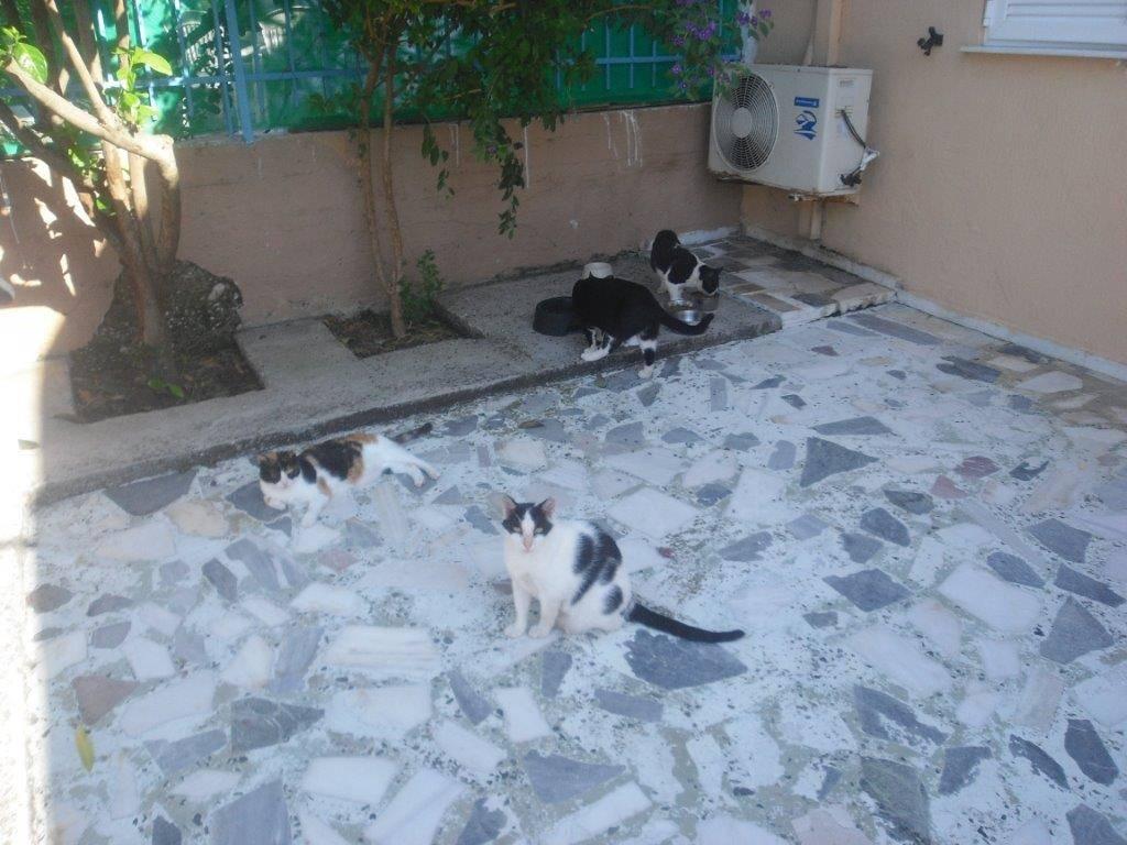 Fütterung von Maria's Katzen