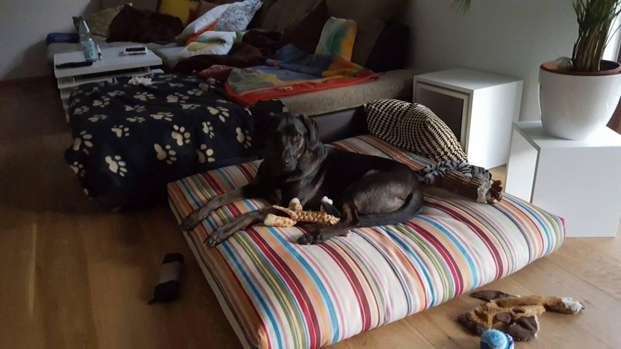 Woodie in seinem neuen Zuhause