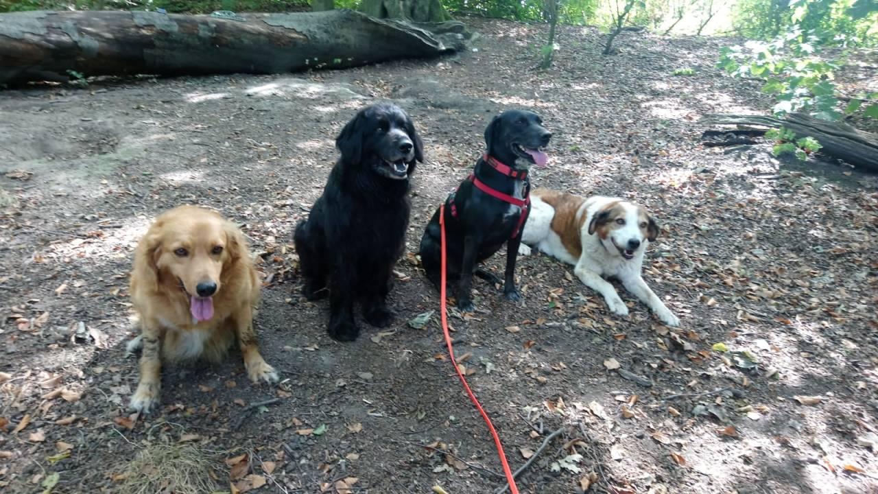 Die ganze Bande auf einen Blick - von links nach rechts: Toffee, Luis, Lotte und Max