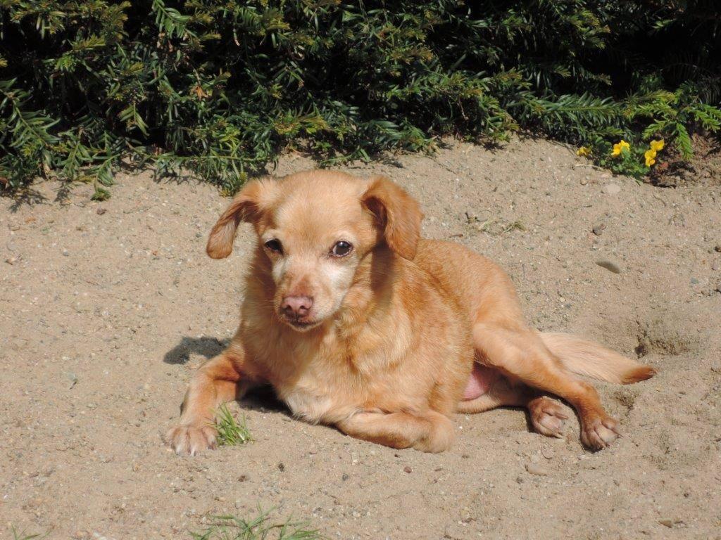 Lily in ihrem Sandkasten