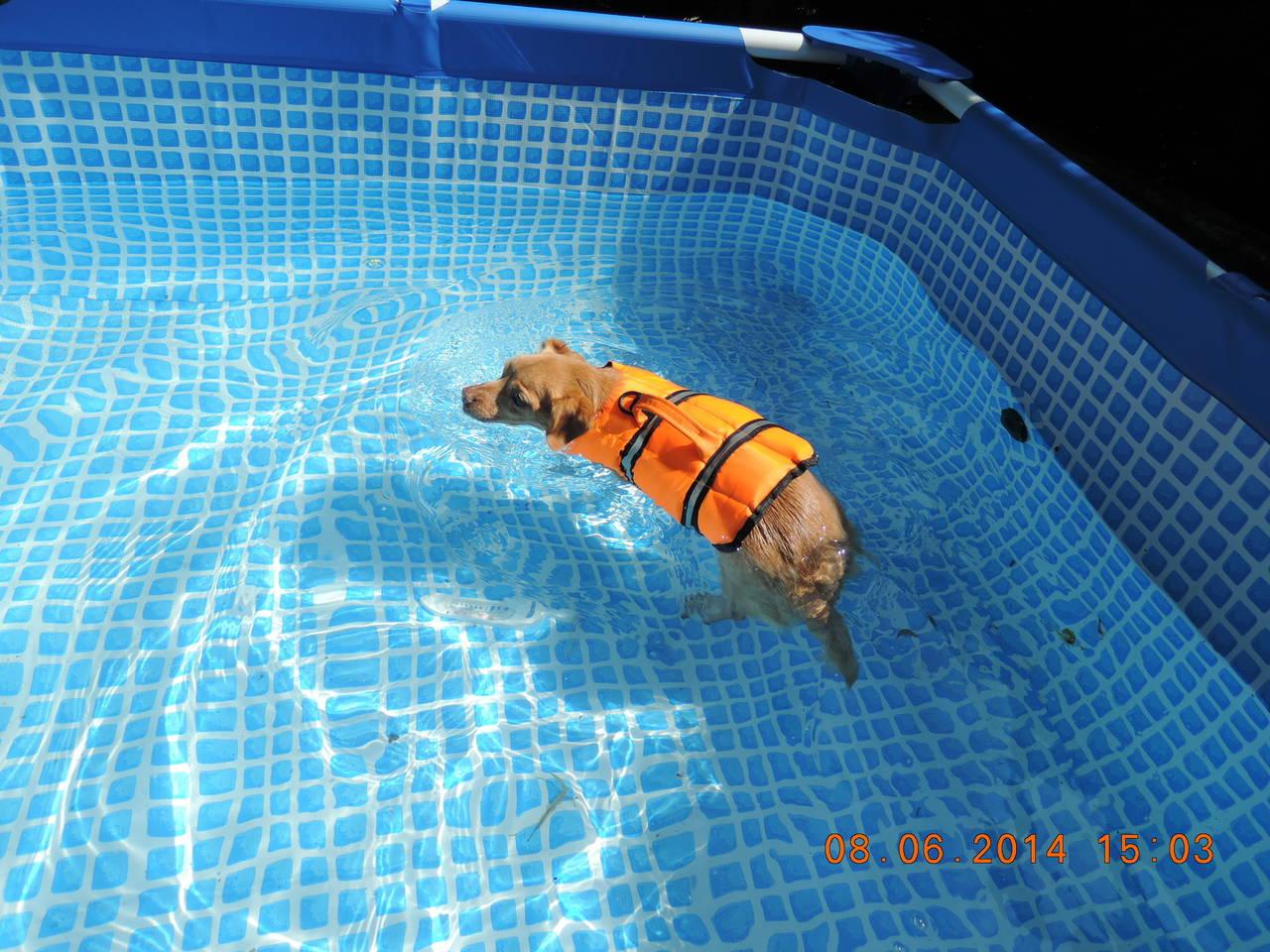Lily macht ihren Freischwimmer