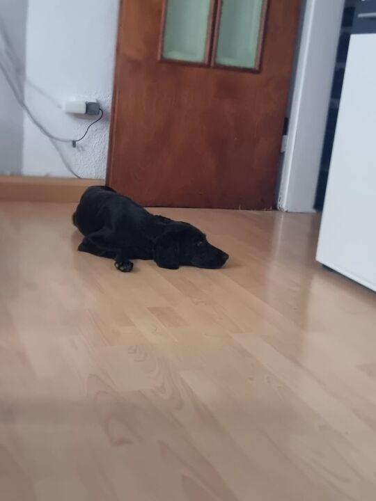 Luna in ihrem neuen Zuhause