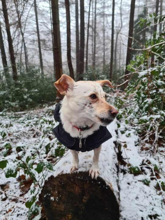 Sally's erster Schnee