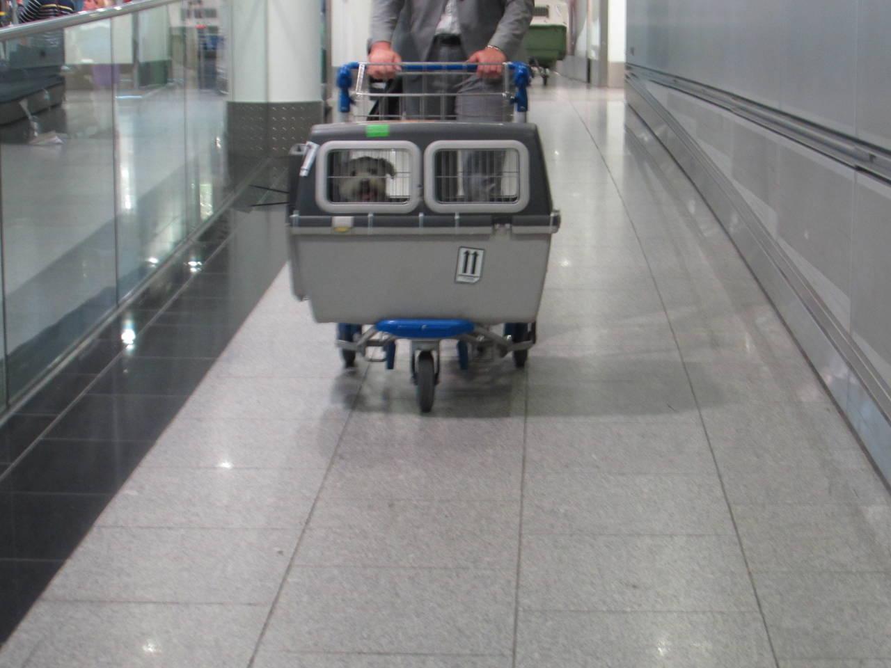 Bobby's Ankunft am Flughafen