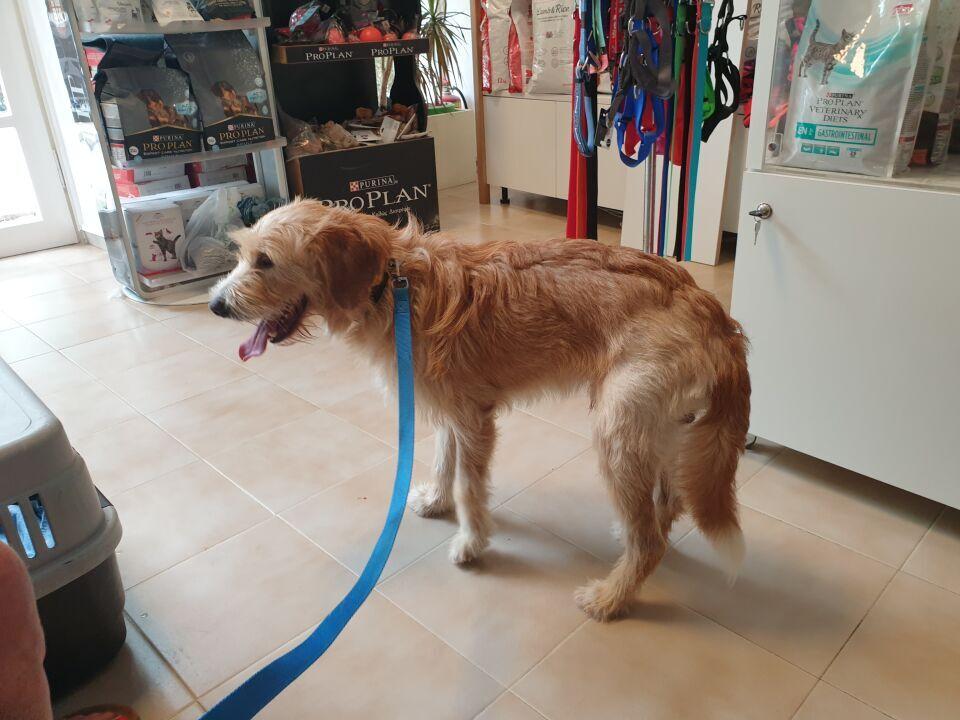 Eddy beim Tierarzt