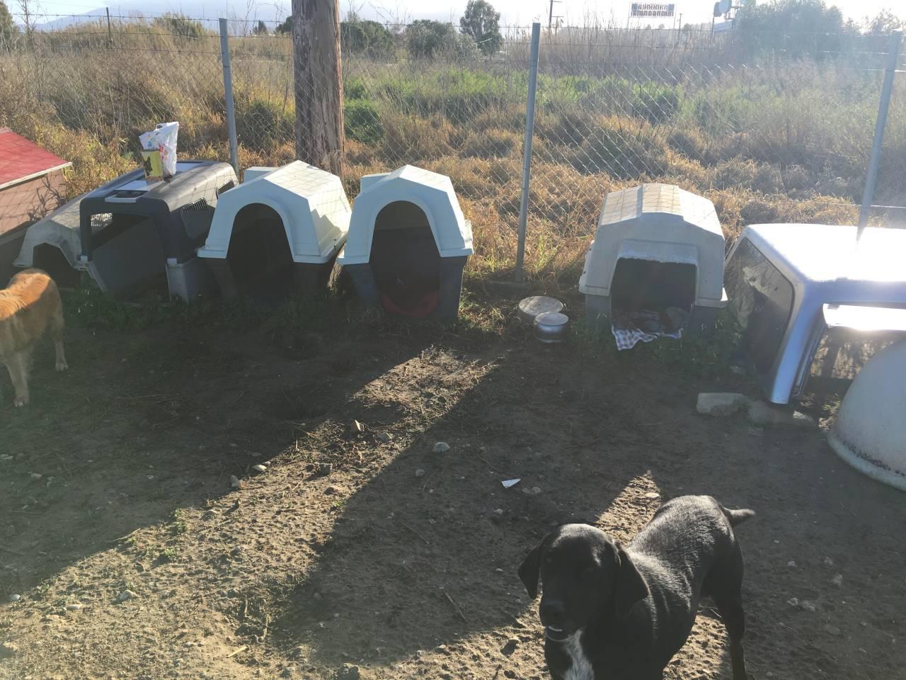 So leben Kanella und die weiteren Hunde zurzeit