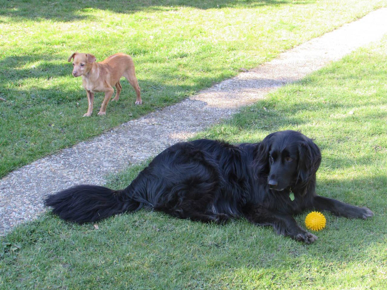 Lily und Luis im Garten